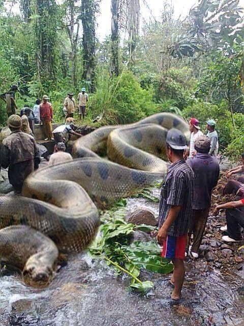 صور اكبر ثعبان فى العالم , اكبر انواع الثعابين فى العالم