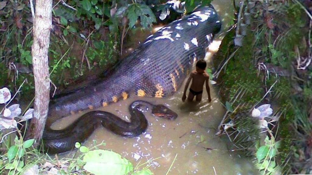 بالصور اكبر ثعبان فى العالم , اكبر انواع الثعابين فى العالم 2393 3