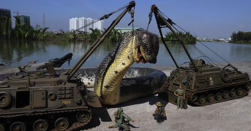 بالصور اكبر ثعبان فى العالم , اكبر انواع الثعابين فى العالم 2393 5