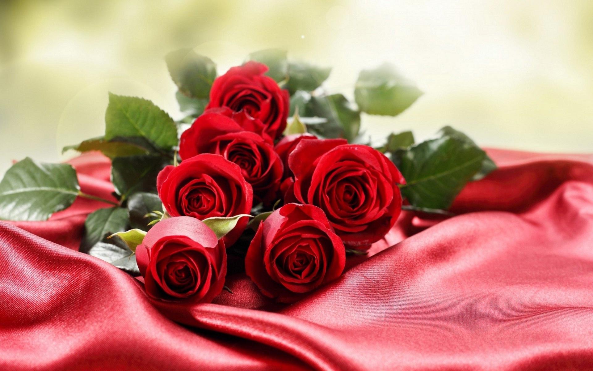 صوره ورود جميلة , اجمل الصور لاحلى الزهور