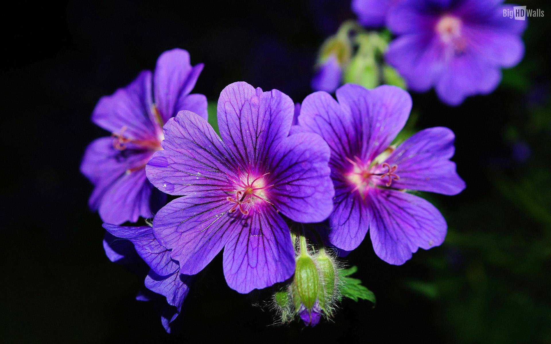 بالصور صور ورود روعه , اشكال تحفه من اجمل الزهور 2498 7