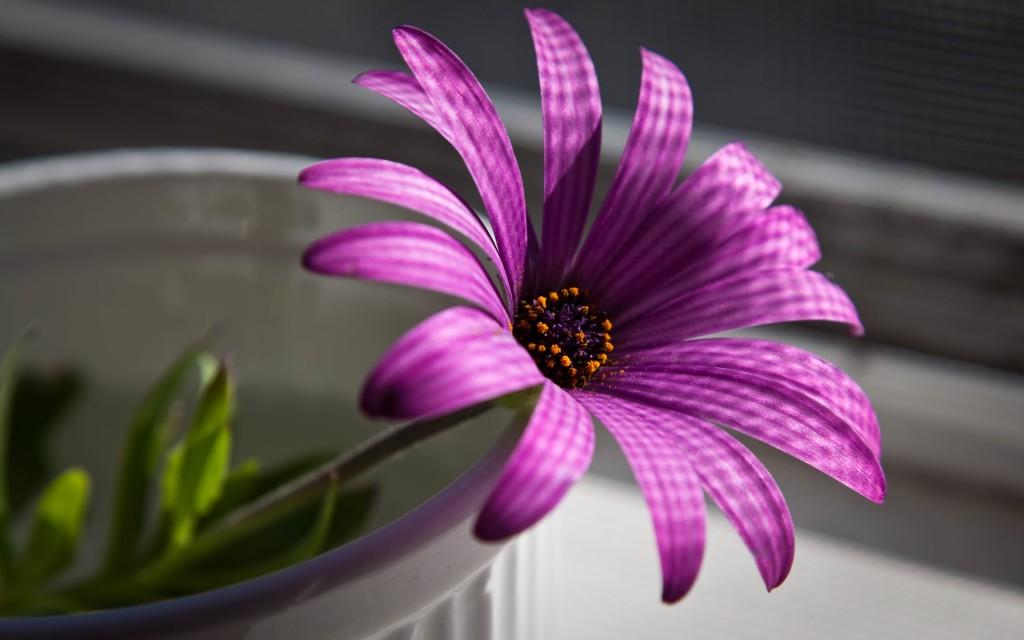 بالصور صور ورود روعه , اشكال تحفه من اجمل الزهور 2498 8
