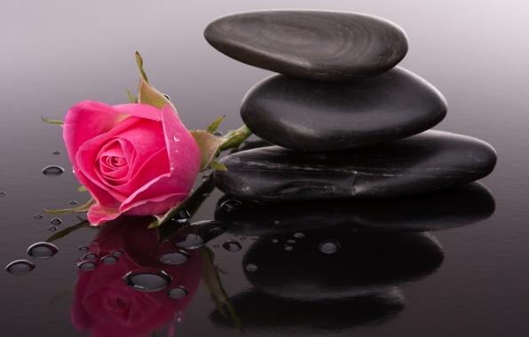 بالصور صور ورود روعه , اشكال تحفه من اجمل الزهور 2498 9