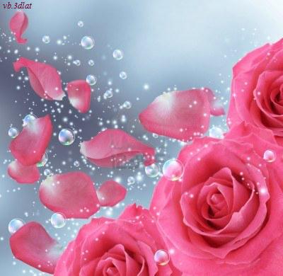 بالصور صور ورد خلفيات , اجمل الخلفيات لاحلى الزهور 2540 1