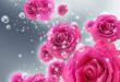 بالصور صور ورد خلفيات , اجمل الخلفيات لاحلى الزهور 2540 3 110x75