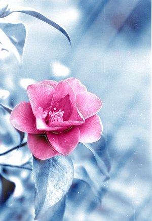 بالصور صور ورد خلفيات , اجمل الخلفيات لاحلى الزهور 2540 3