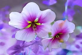 بالصور صور ورد خلفيات , اجمل الخلفيات لاحلى الزهور 2540 4