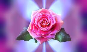 بالصور صور ورد خلفيات , اجمل الخلفيات لاحلى الزهور 2540 5