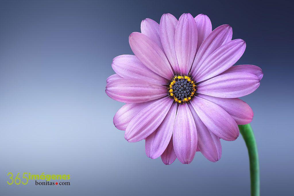 بالصور صور ورد خلفيات , اجمل الخلفيات لاحلى الزهور 2540 6