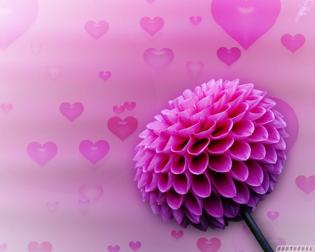 صورة صور ورد خلفيات , اجمل الخلفيات لاحلى الزهور