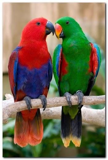 صوره صور بلابل , اجمل انواع العصافير