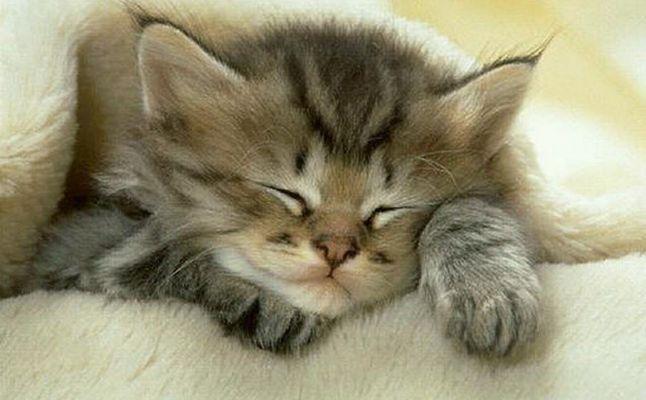 صوره رؤية القطط بالمنام , تفسير رؤيه القطه فى الحلم