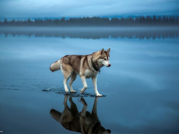 بالصور افضل الصور في العالم , صور طبيعيه رائعه 2976 4