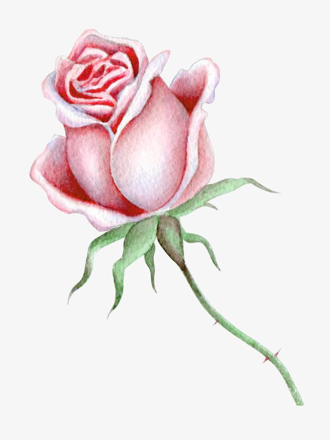 بالصور صور عن الورد , اروع صور الورود و اجملها 2980 3