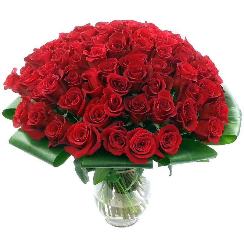 بالصور صور عن الورد , اروع صور الورود و اجملها 2980 4