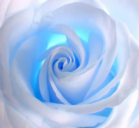 بالصور صور عن الورد , اروع صور الورود و اجملها 2980 5