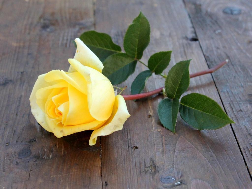 بالصور صور عن الورد , اروع صور الورود و اجملها 2980 9