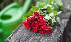 صوره بوكيه ورد احمر , اجمل الورود والزهور