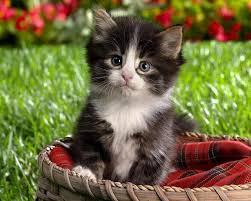 صوره صور قطط جميلة , اشكال قطط روعه
