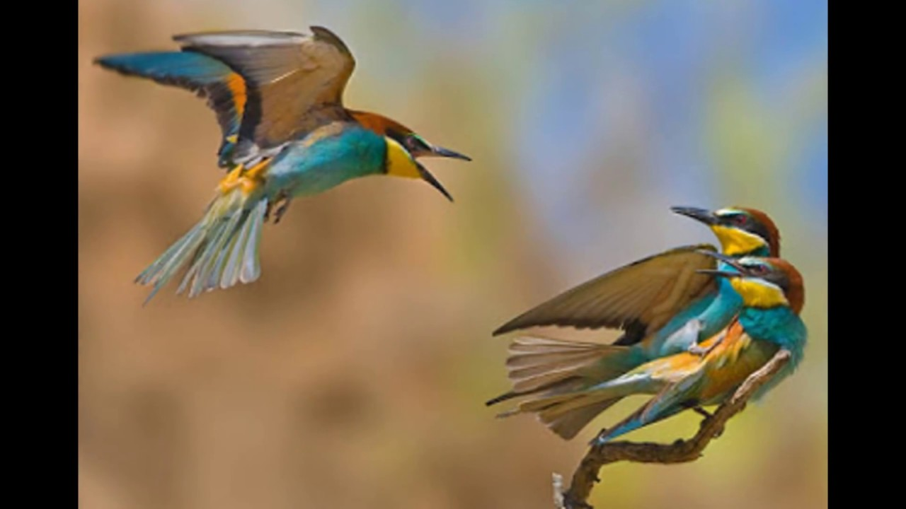 بالصور صور عصافير , عصافير ملونة نادرة 1575 10