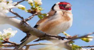 صور صور عصافير , عصافير ملونة نادرة