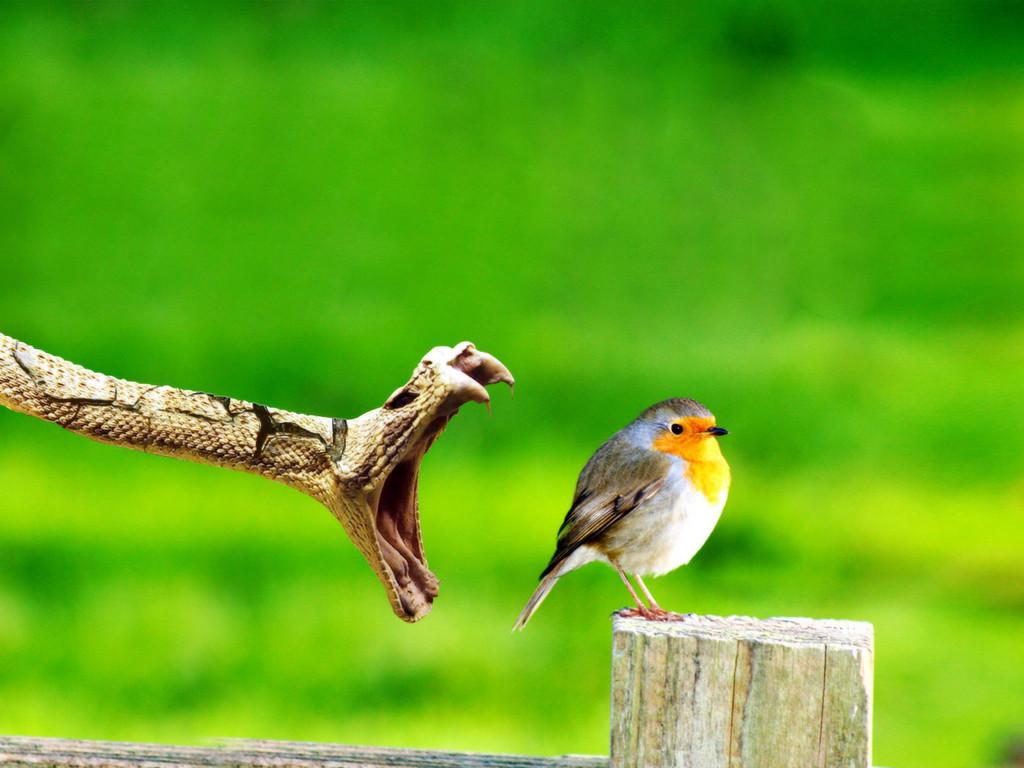 بالصور صور عصافير , عصافير ملونة نادرة 1575 3