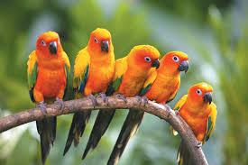 بالصور صور عصافير , عصافير ملونة نادرة 1575 4