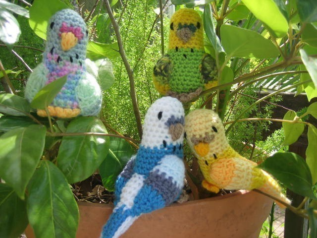 بالصور صور عصافير , عصافير ملونة نادرة 1575 6