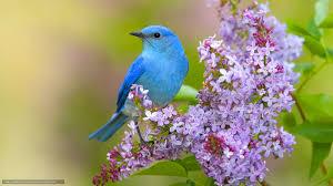 بالصور صور عصافير , عصافير ملونة نادرة 1575 7
