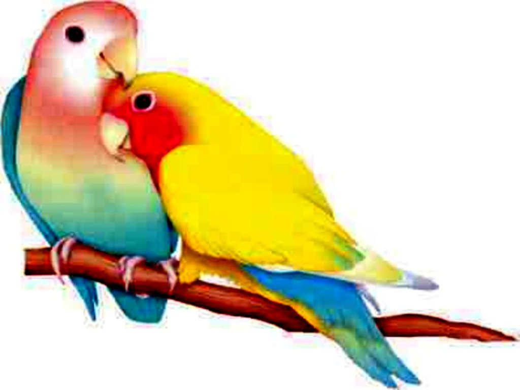 بالصور صور عصافير , عصافير ملونة نادرة 1575 8