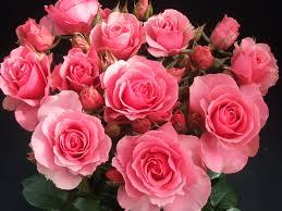 بالصور حكم عن الورد , اجمل كلام عن الورد 1866 6