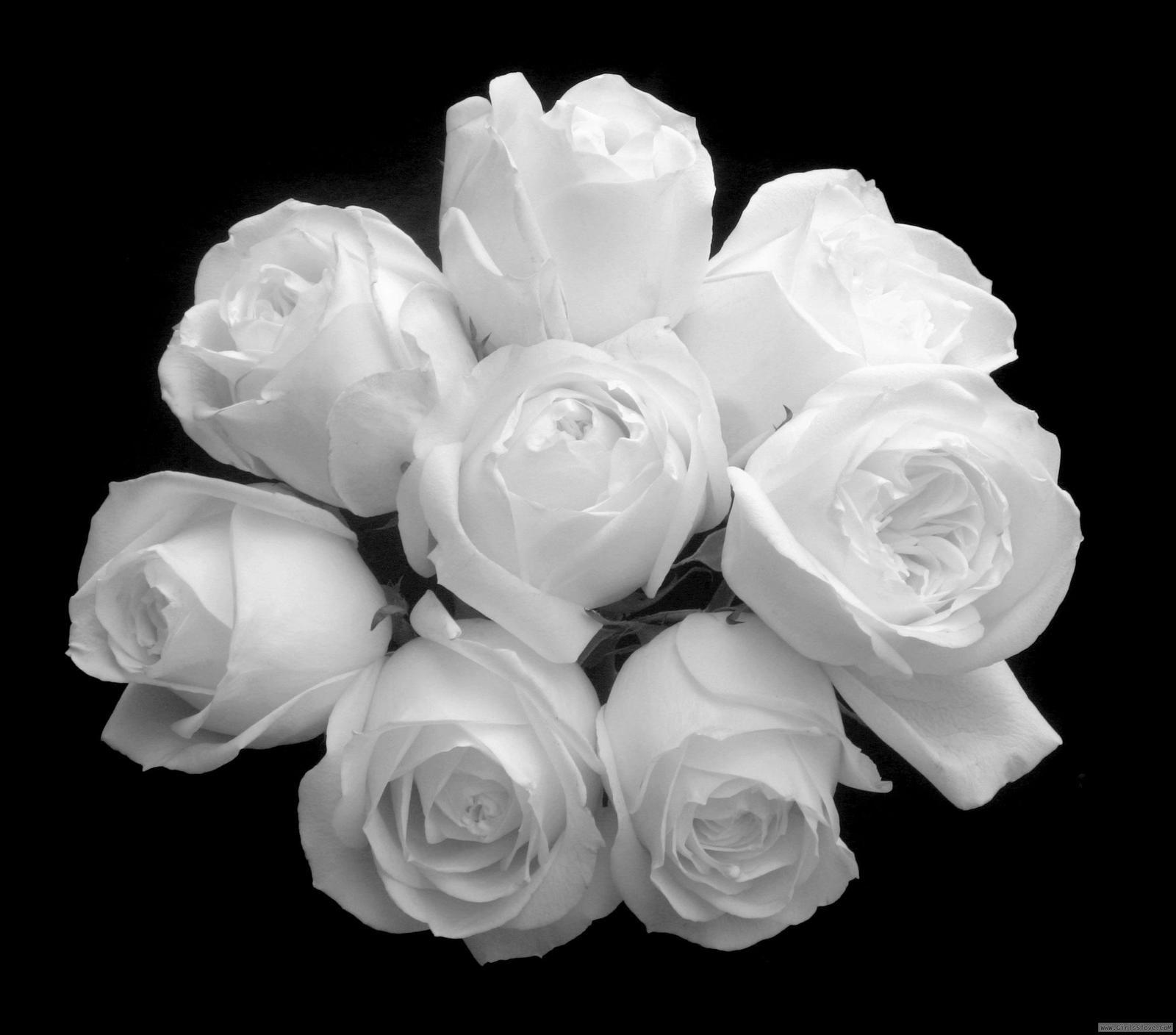 بالصور بوكيه ورد ابيض , الورد الابيض هو النقاء 1917 4