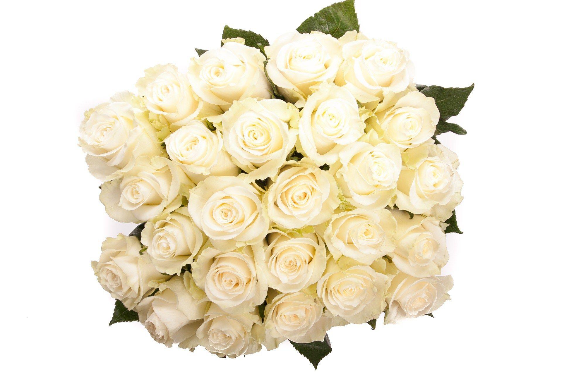 صوره بوكيه ورد ابيض , الورد الابيض هو النقاء