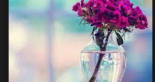 صورة اجمل الصور مكتوب عليها مساء الخير , تحية مساء لطيفة
