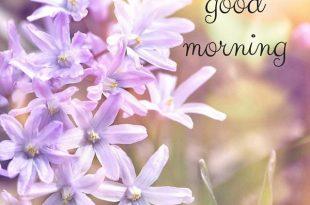 صورة عبارات صباحية , صباحات جميلة بالصور