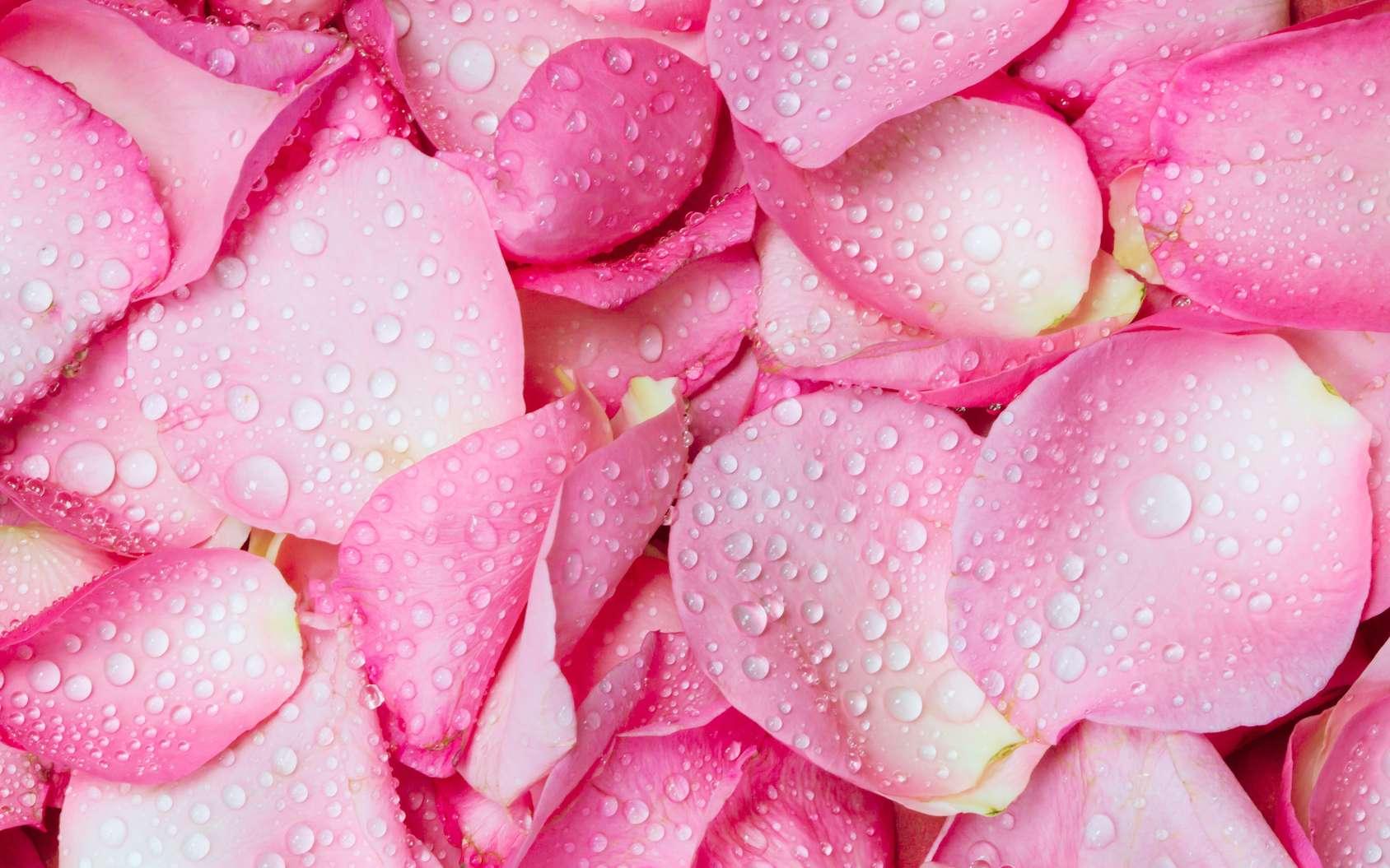 بالصور خلفيات ورد , اكثر صور الورد جاذبية 3014 5