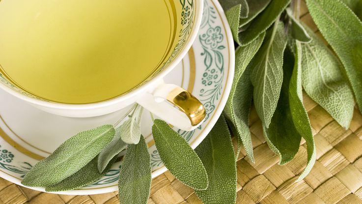 بالصور عشبة الميرمية , نبذة عن هذه النبتة القيمة و فوائدها