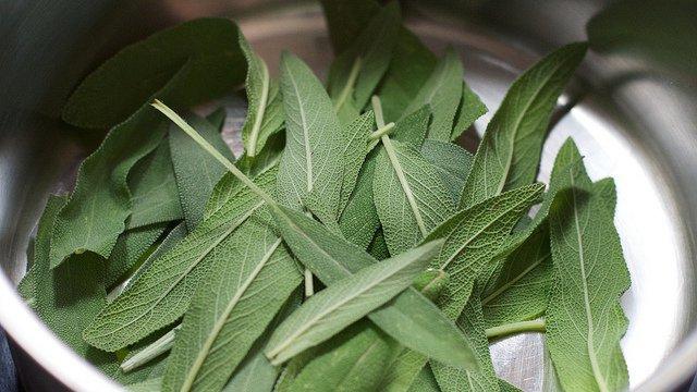 بالصور عشبة الميرمية , نبذة عن هذه النبتة القيمة و فوائدها 3182