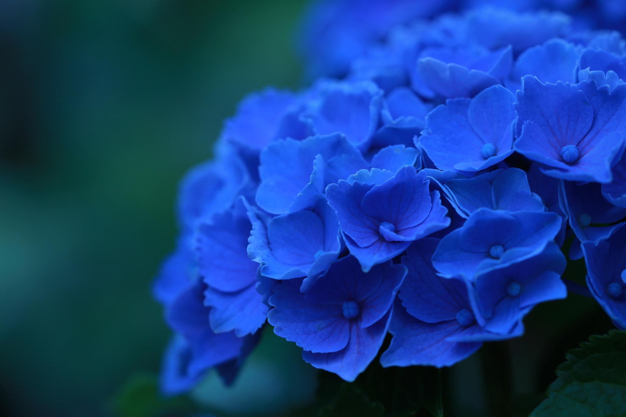 بالصور صور ورد , خلفيات جميله جدا للورد 411 13