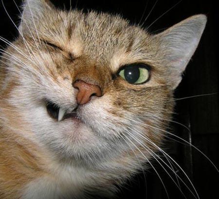 بالصور قطط مضحكة , اجمل صور القطط 986 2