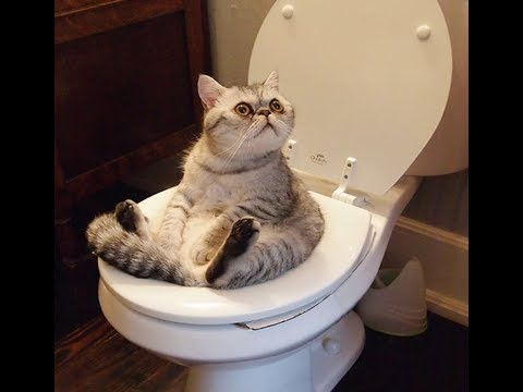 بالصور قطط مضحكة , اجمل صور القطط 986 3