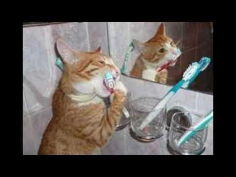 بالصور قطط مضحكة , اجمل صور القطط 986 4