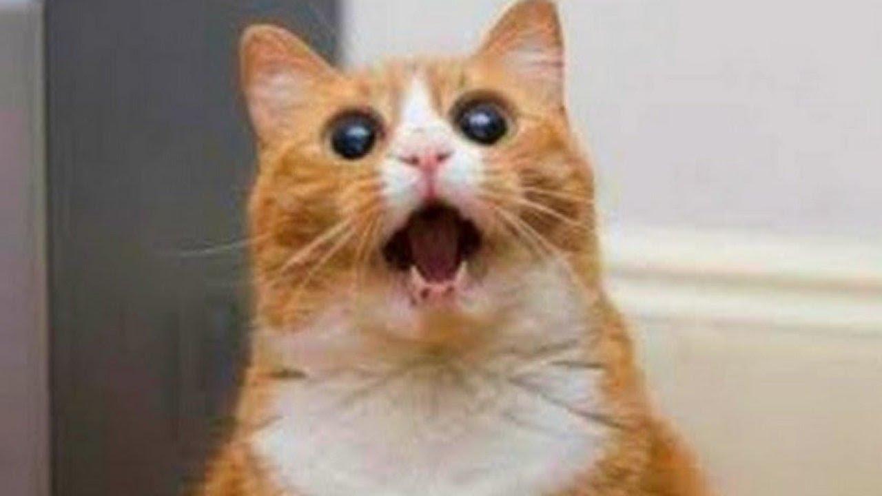 بالصور قطط مضحكة , اجمل صور القطط 986