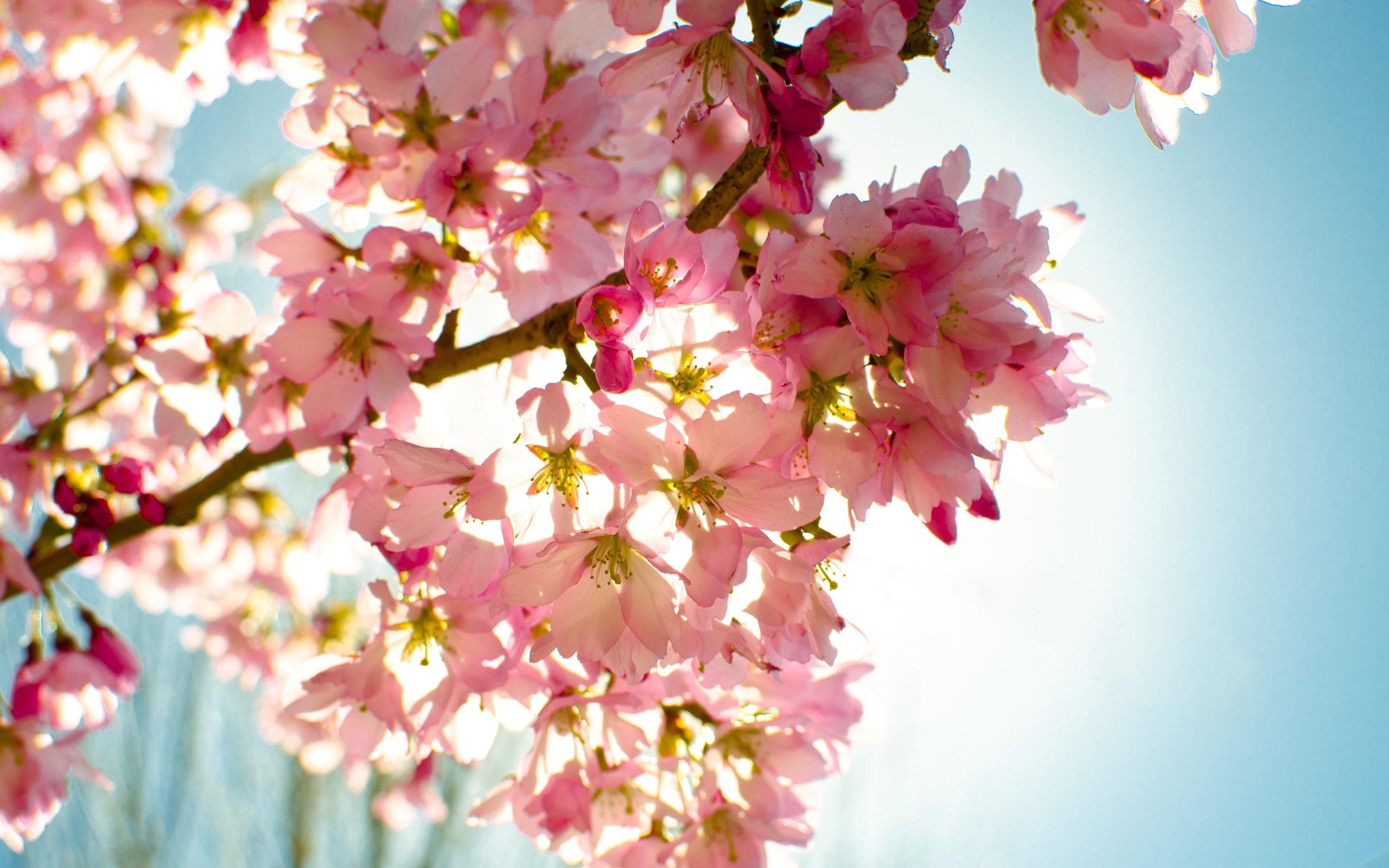 بالصور خلفيات ورود , اجمل صور الازهار الرائعه 989 4