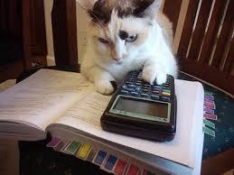 بالصور قطط مضحكة , اجمل صور القطط unnamed file 101