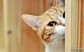 بالصور قطط مضحكة , اجمل صور القطط unnamed file 102