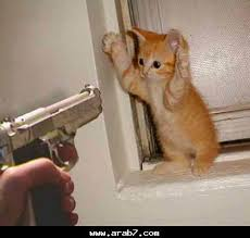 بالصور قطط مضحكة , اجمل صور القطط unnamed file 103