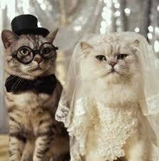 بالصور قطط مضحكة , اجمل صور القطط unnamed file 105