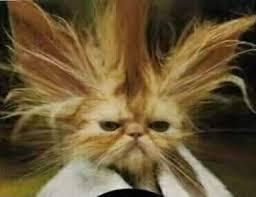 بالصور قطط مضحكة , اجمل صور القطط unnamed file 107