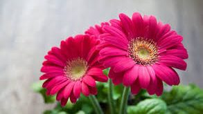 صوره خلفيات ورود , اجمل صور الازهار الرائعه